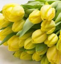 Tulpen zijn er weer